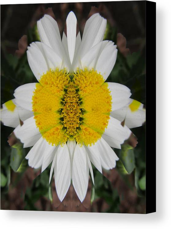 Flowers Canvas Print featuring the photograph Daisy Dream by Michele Caporaso