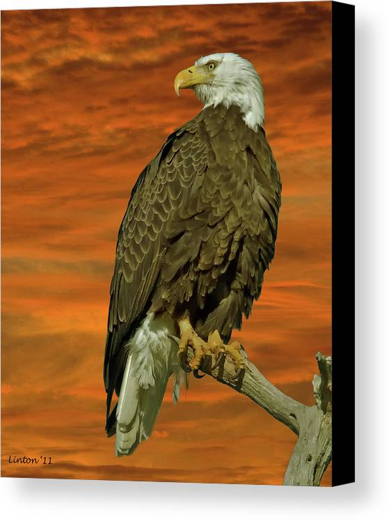 Bald Eagle Canvas Print featuring the photograph Bald Eagle At Sunrise by Larry Linton