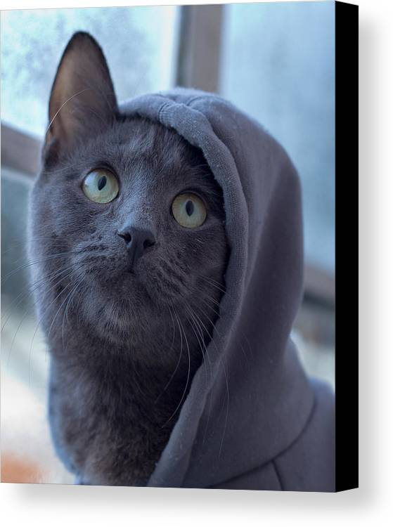 Russian Blue Canvas Print featuring the photograph Cold Uther by Kittysolo Photography