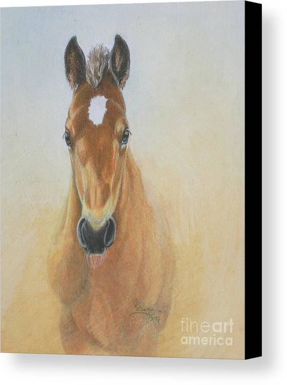 Colored Pencil Canvas Print featuring the drawing Foal Study by Carrie L Lewis