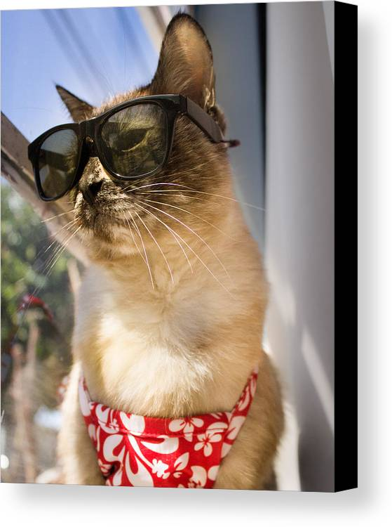 Siamese Canvas Print featuring the photograph Hot Nermal by Kittysolo Photography