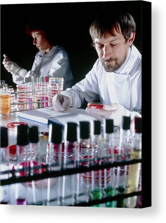 Microbiology Laboratory Canvas Print featuring the photograph Quality Control On Media To Grow Microorganisms by Geoff Tompkinson