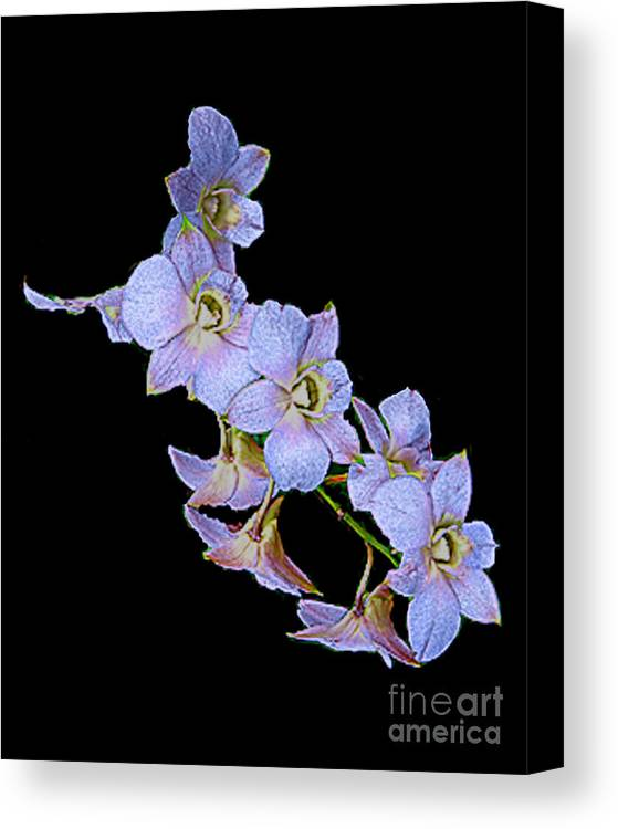 Orchids Canvas Print featuring the photograph String Of Light Blue Orchids by Merton Allen