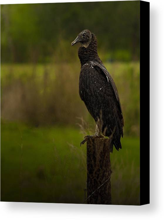 Birds Canvas Print featuring the photograph Waiting by Thomas Warner