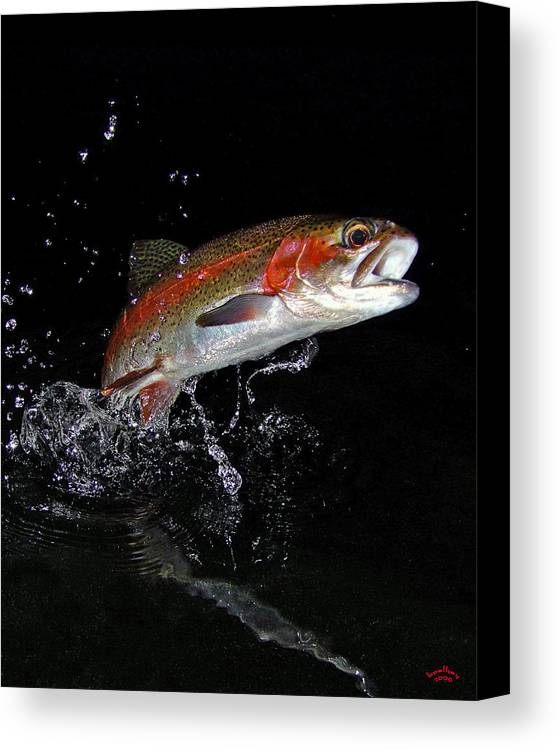 Rainbow Trout Canvas Print featuring the photograph 3d Rainbow by Brian Pelkey