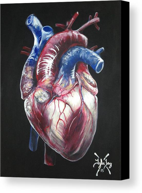 Anatomical Heart Canvas Print Canvas Art By Tyler Haddox