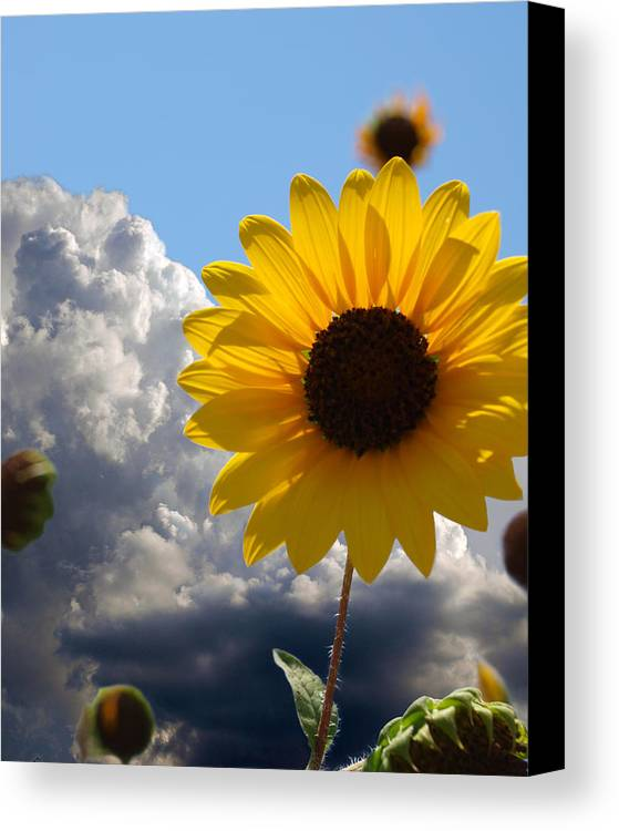 Floral Canvas Print featuring the photograph Answer Coming by James Granberry