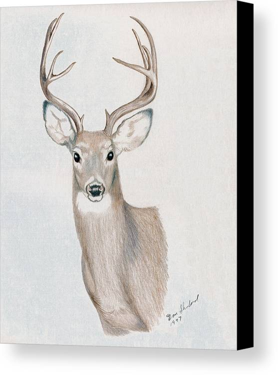 Wildlife Canvas Print featuring the drawing Big Buck by Daniel Shuford