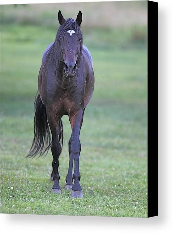 Horse Canvas Print featuring the photograph Black Horse by Glenn Vidal