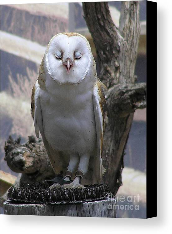 Barn Canvas Print featuring the photograph Blinking Owl by Louise Magno
