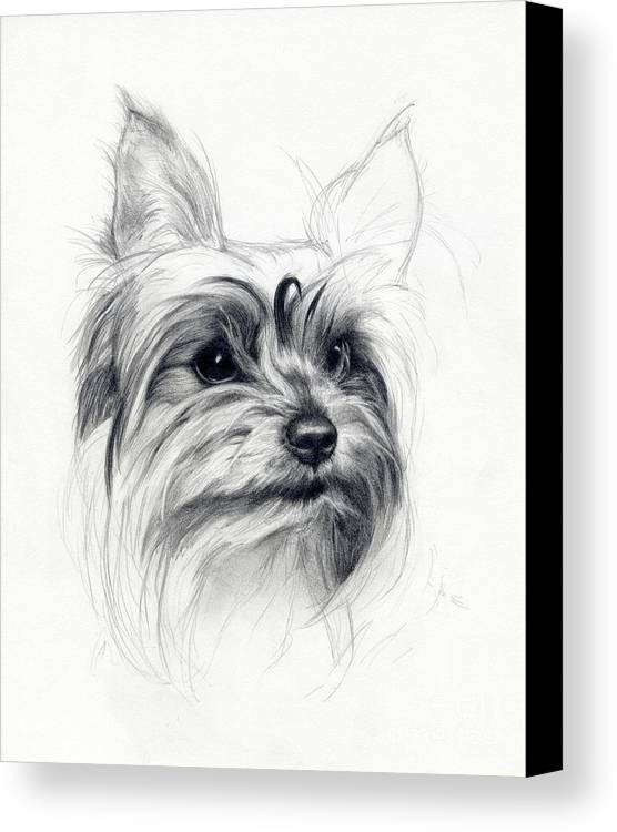 Dog Canvas Print featuring the drawing Bobby by Tim Thorpe