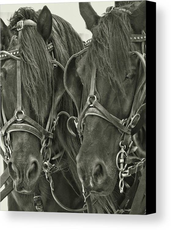 Horse Canvas Print featuring the photograph Paired Carriage Ponies by JAMART Photography