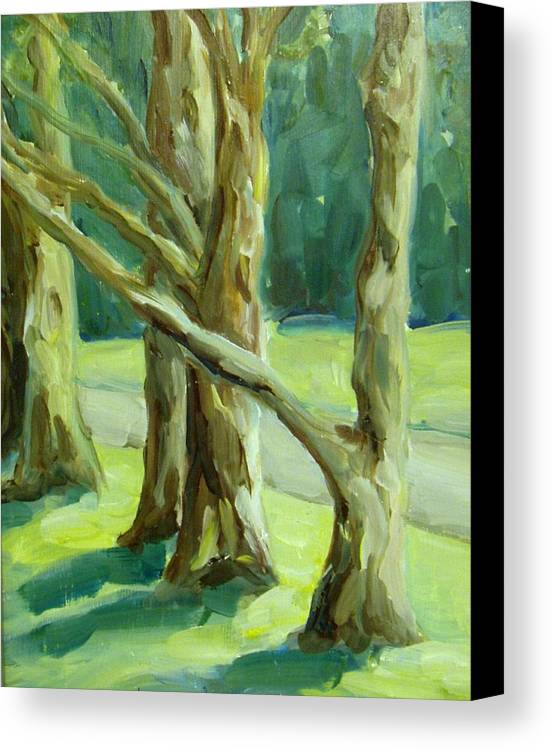 Trees Canvas Print featuring the painting Cedars In Woodward Park by Linda Vespasian