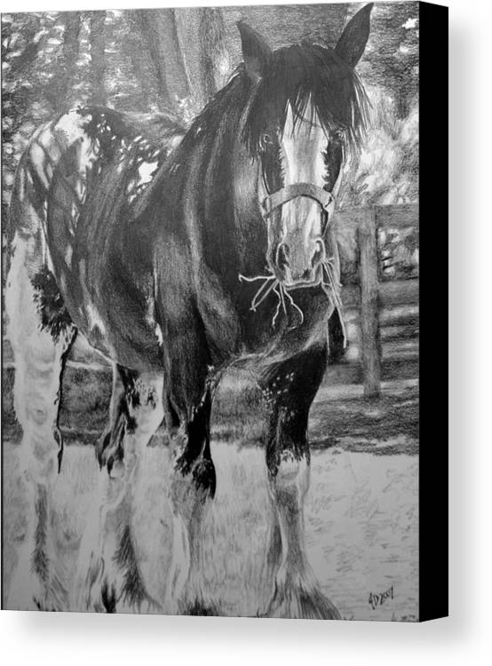 Horse Canvas Print featuring the drawing Clydesdale by Darcie Duranceau