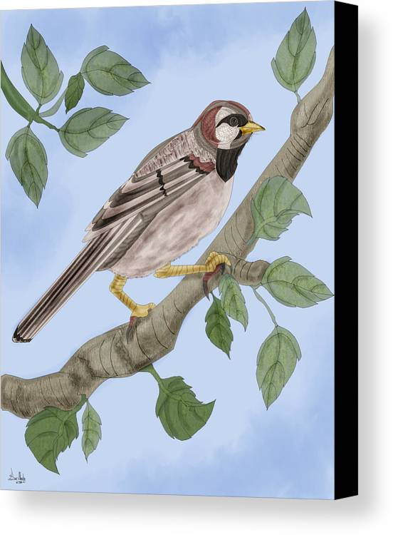 Sparrow Canvas Print featuring the painting Common House Sparrow by Anne Norskog