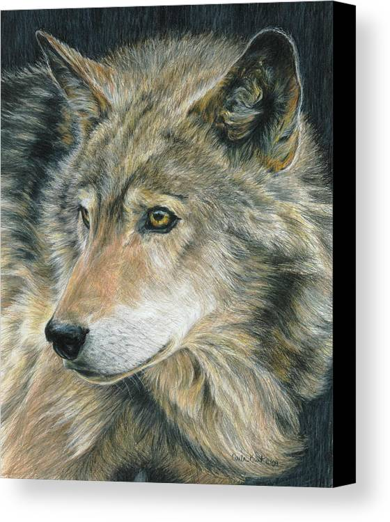 Wolf Canvas Print featuring the drawing Curious Eyes by Carla Kurt