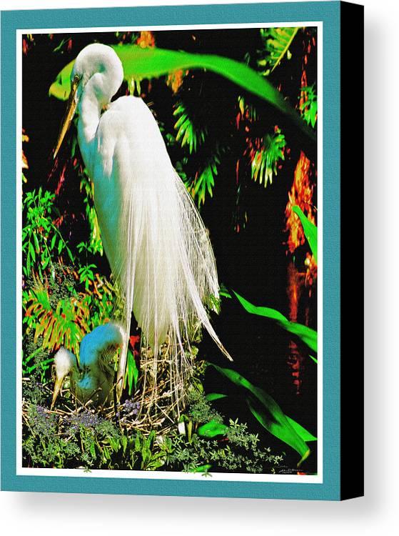 Florida Birds Egret Snow White Egret Canvas Print featuring the digital art Egret3 by John Breen