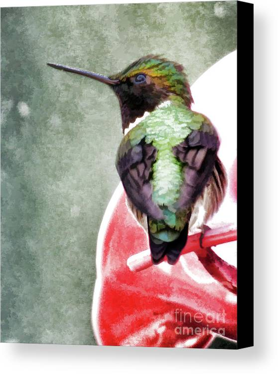 Award Winner Canvas Print featuring the photograph Hummingbird by Laura Atkinson