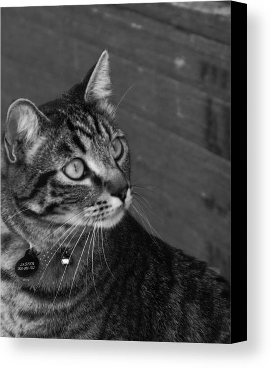 Animal Canvas Print featuring the photograph Jasper by Jan Tribe