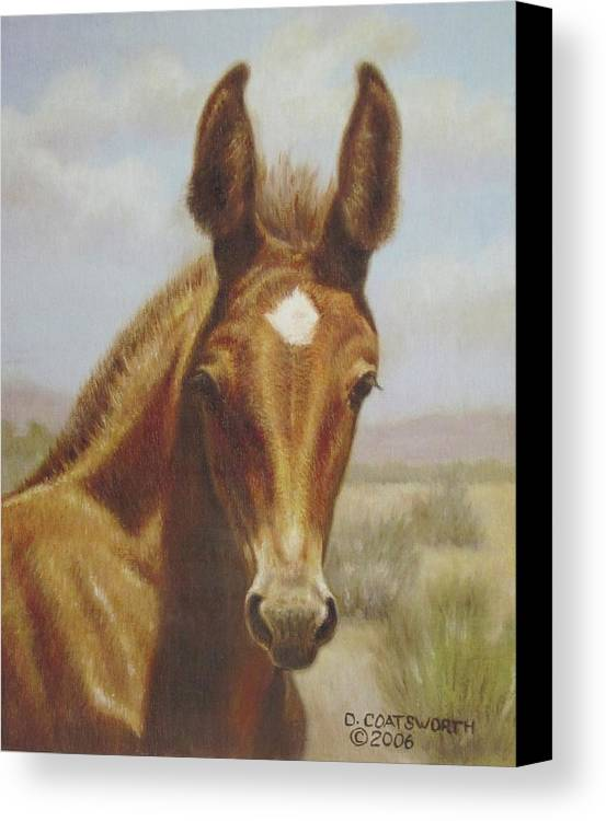 Canvas Print featuring the painting Molly Mule Foal by Dorothy Coatsworth