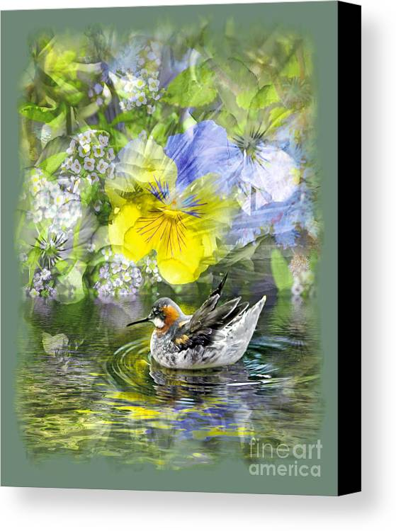 Floral Canvas Print featuring the photograph Pintail Pond by Chuck Brittenham