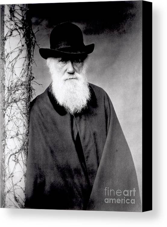 Portrait Of Charles Darwin (1809-82) 1881 (b/w Photo) By Julia Margaret Cameron (1815-79) Canvas Print featuring the photograph Portrait Of Charles Darwin by Julia Margaret Cameron