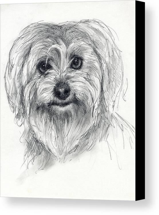 Dog Canvas Print featuring the drawing Rosie by Tim Thorpe