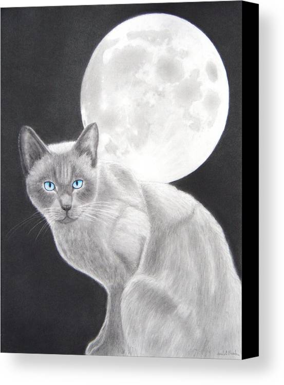 Cat Canvas Print featuring the drawing Sasha by Nicole I Hamilton