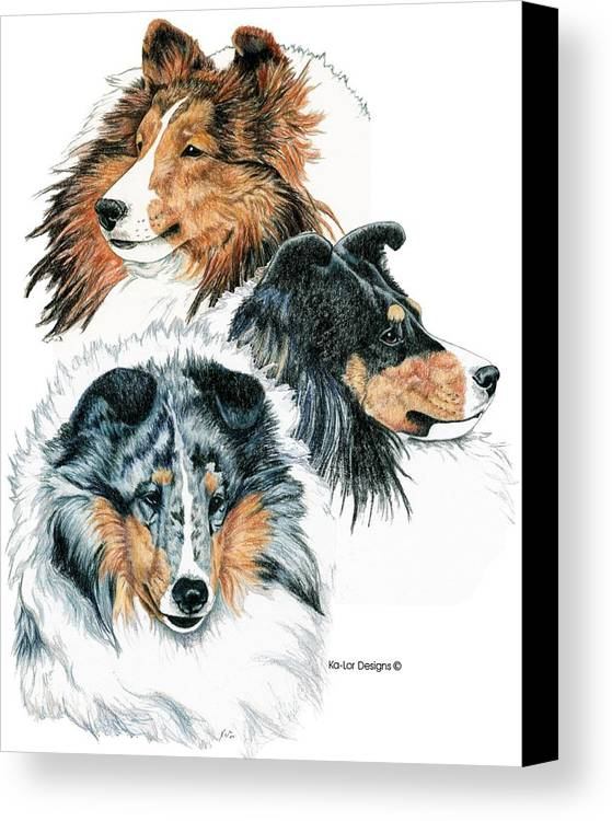 Shetland Sheepdog Canvas Print featuring the drawing Shetland Sheepdogs by Kathleen Sepulveda
