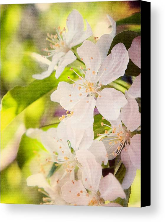 Art Canvas Print featuring the photograph Spring Blossoms by Al Mueller