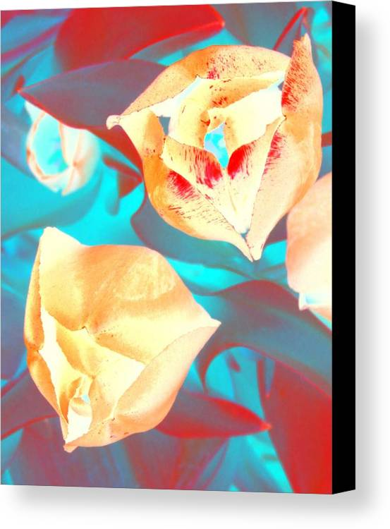 Tullips Canvas Print featuring the photograph Tullip Glow by Tiffany Vest