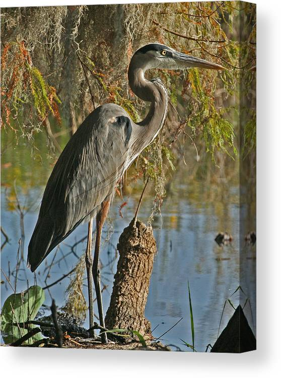 Great Blue Heron Canvas Print featuring the photograph Great Blue Heron by Jeff Wright