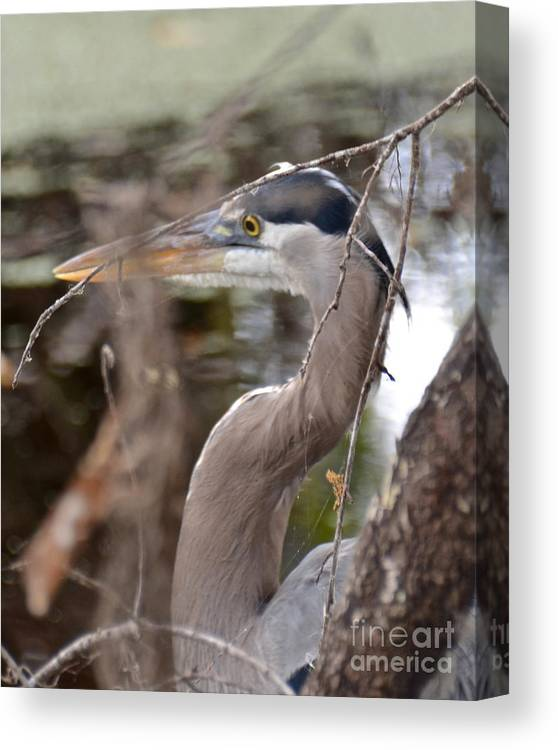 Heron Canvas Print featuring the photograph Hide And Seek by Carol Bradley