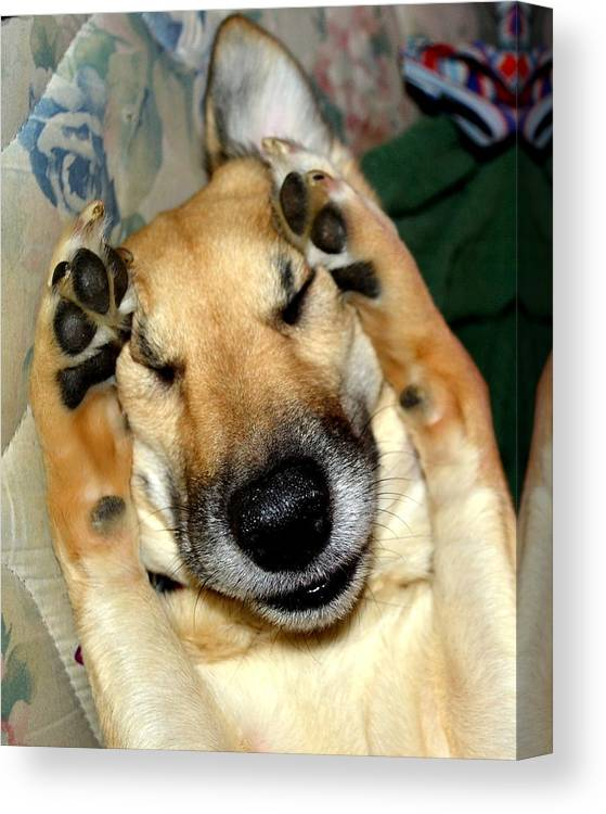 Peek-a-boo Canvas Print featuring the photograph Peek-a-boo I See You Pup by Julie Vega