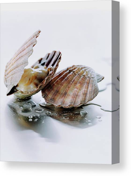 Cooking Canvas Print featuring the photograph Two Scallops by Romulo Yanes