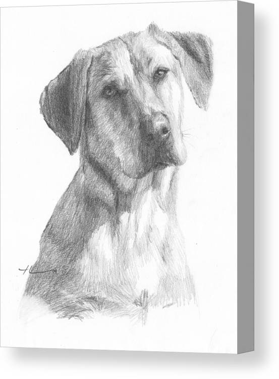 Www.miketheuer.com Yellow Lab Dog Pencil Portrait Canvas Print featuring the drawing Yellow Lab Dog Pencil Portrait by Mike Theuer