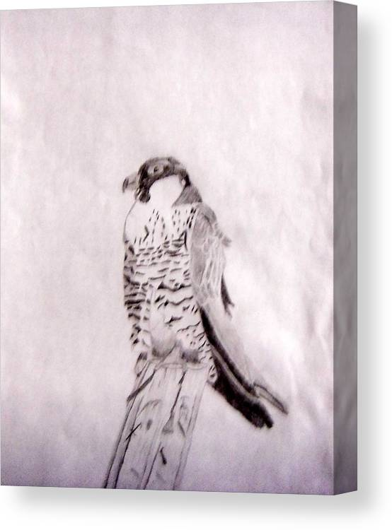 Falcon Canvas Print featuring the drawing Peregrine Falcon by Kristin Davis