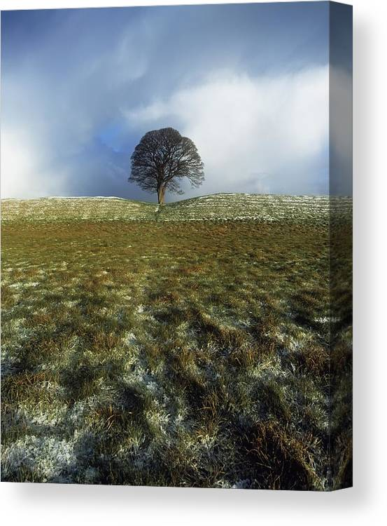 Cloud Canvas Print featuring the photograph Tree On A Landscape, Giants Ring by The Irish Image Collection