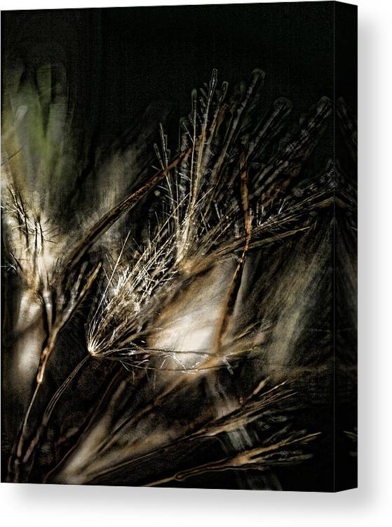Wild Grasses Canvas Print featuring the photograph Wild Grasses by Bonnie Bruno