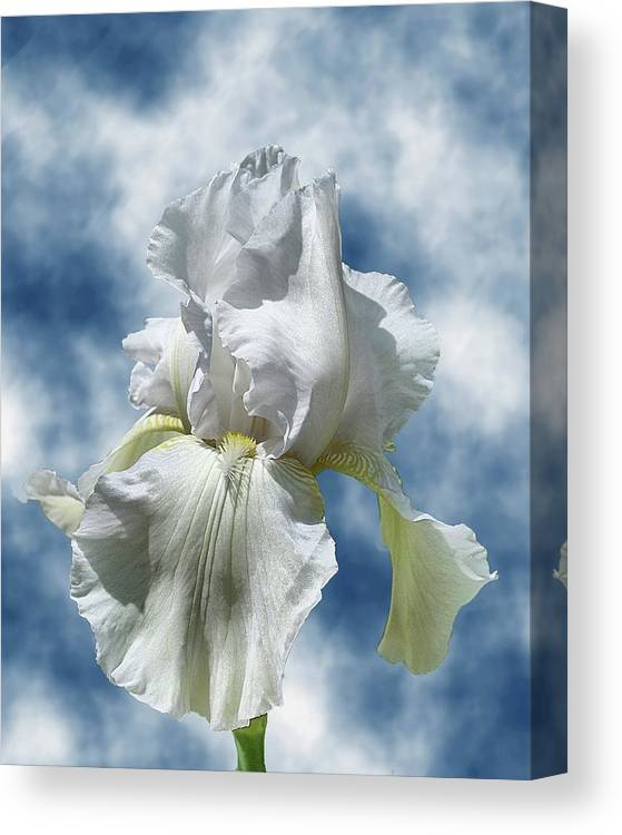 Flowers Canvas Print featuring the photograph Iris In The Clouds by Rick Friedle