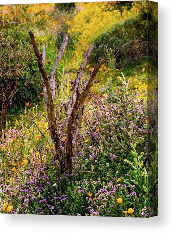 Abundant Canvas Print featuring the photograph Life And Death by Crystal Garner