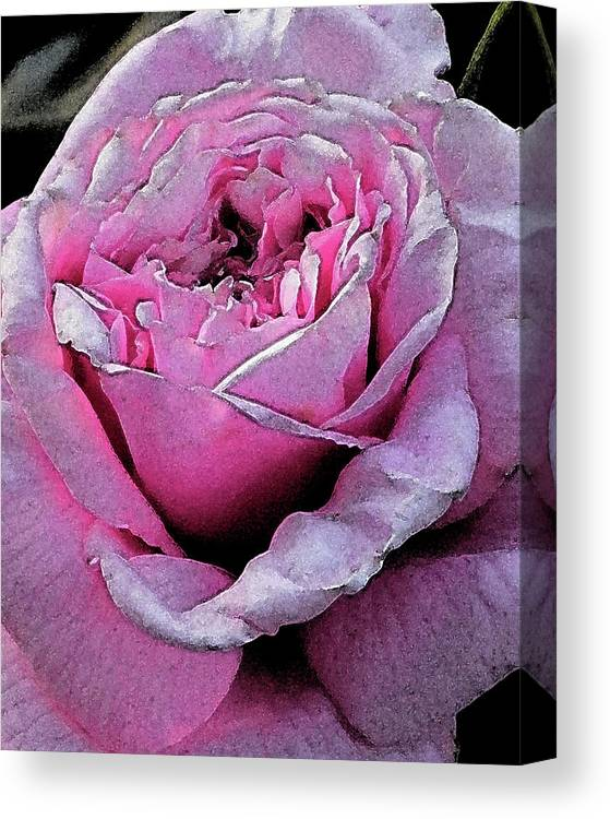 Flowers Canvas Print featuring the digital art Rose by Michele Caporaso