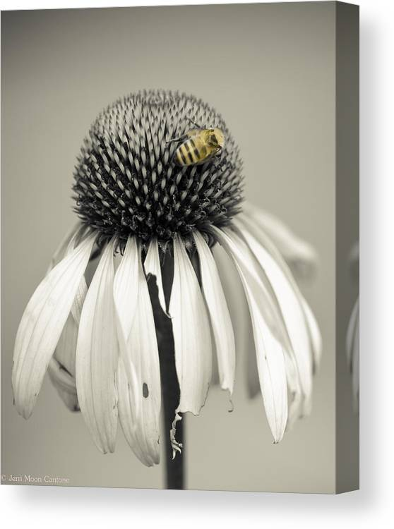 Black And White Canvas Print featuring the photograph Bee by Jerri Moon