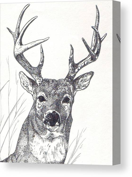 Whitetail Deer Canvas Print featuring the painting Big Buck by Debra Sandstrom