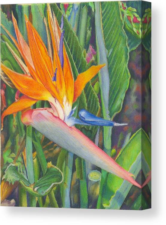 Flower Canvas Print featuring the painting Bird O Paradise by Robynne Hardison