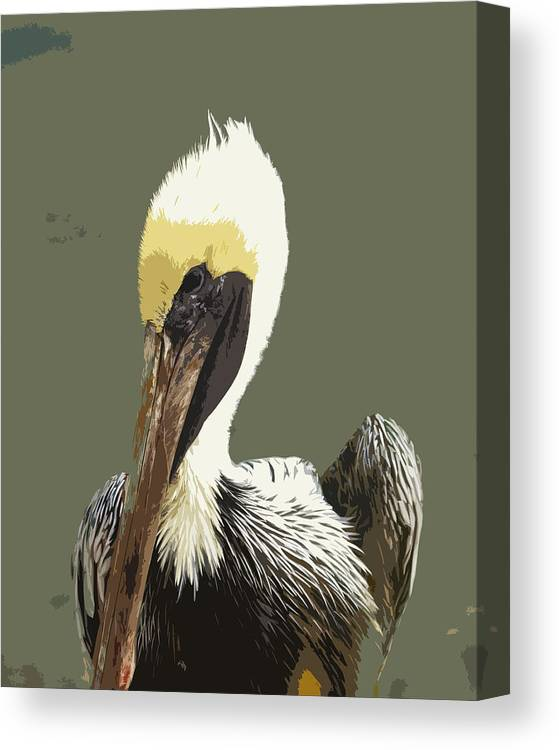 Pelican Canvas Print featuring the painting Florida Brown Pelican by Allan Hughes