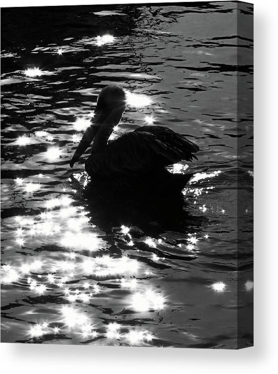 Nature Canvas Print featuring the photograph Magical Pelican by Peg Urban