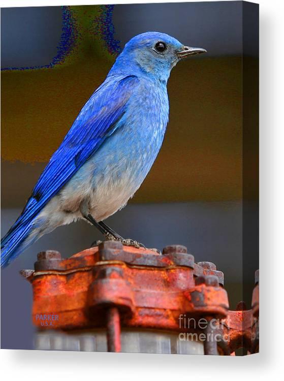 Birds Canvas Print featuring the photograph Mountain Blue Bird by Parker