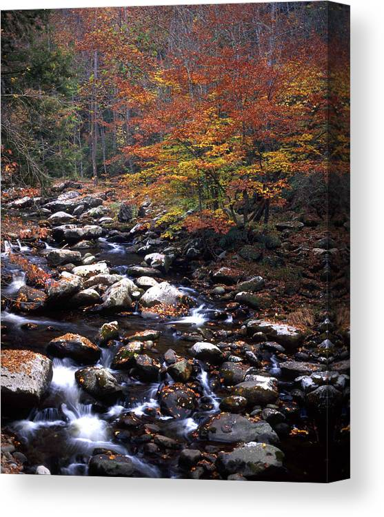 Mountain Canvas Print featuring the photograph Mountain Leaves In Stream by George Ferrell