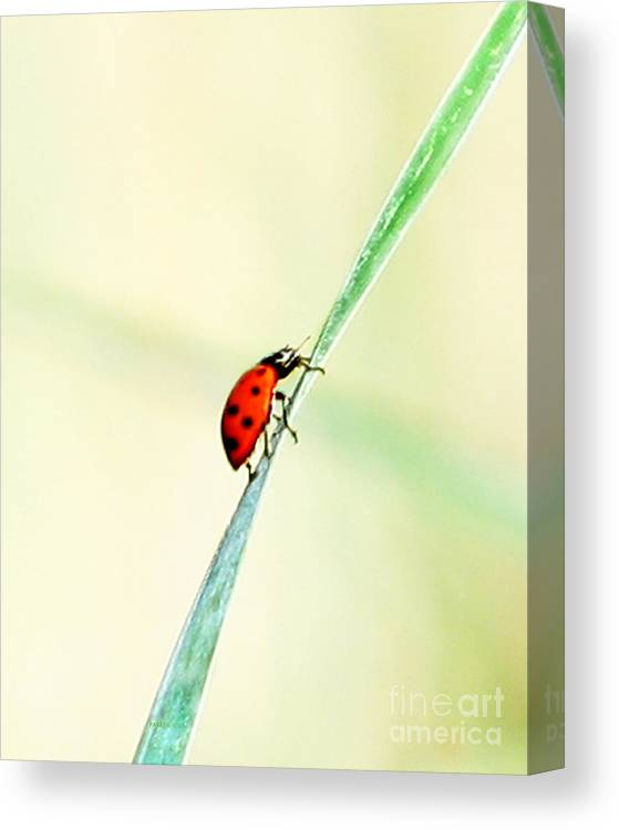Ladybug Canvas Print featuring the photograph Movin On Up by Parker